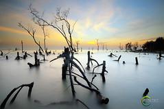 ::Nothing:: (Green.Boy) Tags: longexposure sunset beach nikon laut malaysia damai manfrotto sigma1020mm leefilter ketenangan pantaikelanang d300s