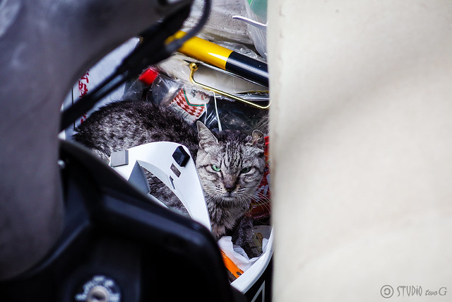 Today's Cat@2013-12-29
