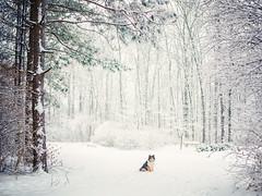 Sitting in a Winter Wonderland (NKAWoods) Tags: trees winter dog snow vortex home forest landscape portfolio polar kenzie winterwonderland facebook deepfreeze winterlandscape polarvortex visualtoolbox