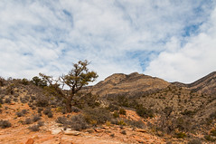 Red Rock Canyon (Wells Photos) Tags: redrockcanyon mountains nevada sigma1850f28 nikond90