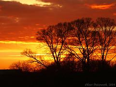 Sunset Contrasts 2 (Oliver Deisenroth) Tags: sunset tree dusk olympusstylus1