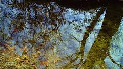 Reflet dans l'eau 4 (mahler9) Tags: trees reflection nature water boston stream arboretum arnoldarboretum jaym mahler9 andantecomodofotos
