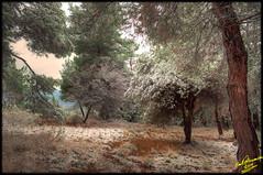 Snowy forest scene .... HDR (Emil9497 Photography & Art) Tags: snow forest geotagged hellas greece drama nikiforos d90 forestscene nikond90 snowyforest mygearandme mygearandmepremium mygearandmebronze emil9497photogrpahyart emilathnasiou geo:lat=4116344693423239 geo:lon=24320318698883057