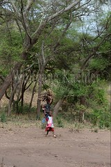 10071660 (wolfgangkaehler) Tags: africa people woman tanzania person african firewood carrying lakemanyara eastafrica eastafrican tanzanian environmentalimpact tanzaniaafrica environmentalissue lakemanyaratanzania environmentalconcern {vision}:{outdoor}=099 {vision}:{plant}=0852