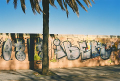 betel tree (Simooooon) Tags: barcelona travel espaa tree film del canon 50mm spain fuji ae1 journey litoral platja reise betel playero