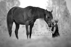 The Promise (Hestefotograf.com) Tags: summer horse fashion oslo norway spring mare friendship egypt egyptian bond arabian majestic promise equestrian stallion equine equus equipage purebreed