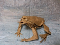 Kosuge Akihiro's Toad, folded by me (Hansen Yang) Tags: origami pattern amphibian toad cp crease akihiro kosuge 火雲邪神