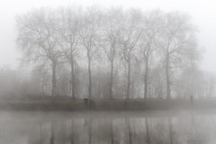 The big 7 (ElmerstarK) Tags: france tree fog canal bourgogne arbre brouillard saône côtedor auxonne tillenay