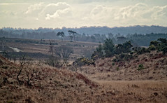 smugglers [explored] (carol_malky) Tags: trees mist grass clouds layers shrubs newforest smugglers explored abigfave