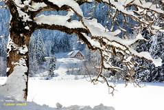 Solitude (arno18) Tags: winter snow france montagne lac arbres neige chapelle lanscape glace hautesavoie vallon greatphotographers bellevaux saintbruno rocdenfer chevrerie lacdevallon saariysqualitypictures ruby15