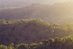 Sun Goes Down (ignatiusadhitya) Tags: trees sunset sun nature yellow forest sunrise landscape warm breeze