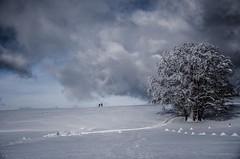 Pictural (PaxaMik) Tags: winter snow tree clouds cloudy hiver silhouettes neige nuages arbre froid calme retord paysagedhiver cielnuageux plateauderetord paysagedeneige bleufroid