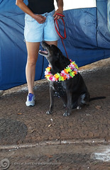DSC03129 (O KDUKO) Tags: pets pessoas crianas animais araraquara