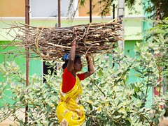 Leaves and Branches (The Spirit of the World) Tags: road portrait woman india colorful asia candid branches streetscene local sari southernindia indianwoman workingwoman