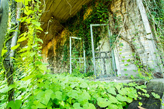 Wash Out Ivy and Doors (Ellen Heath Photography) Tags: wood old house green doors ivy manual foreground