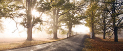 Fall Morning (rubberducky_me) Tags: bridge autumn trees light panorama orange brown fall leaves fog driving country newengland nsw armidale