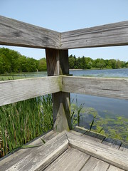 Wheaton, IL, Herrick Lake Forest Preserve, Pier View to Lake (Mary Warren (6.8+ Million Views)) Tags: wood plants lake green nature water pier pond flora foliage deck wheatonil herricklakeforestpreserve