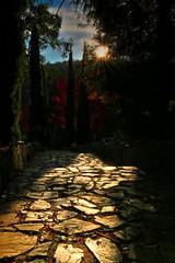 Maroondha Reservoir Park (Farhat M) Tags: autumn trees winter light sky clouds landscape shadows outdoor path dam australia victoria serene silhouttes sunstar 1635mm pavedpathway canon70d