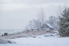 Winter coast (Infomastern) Tags: winter cold vinter frost rime beddingestrand rimfrost kallt