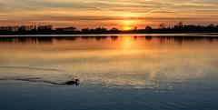 sailing by (stevefge (away travelling)) Tags: sunset sky panorama sun sunlight water netherlands birds reflections sundown nederland ducks weurt grindgat nederlandvandaag reflectyourworld