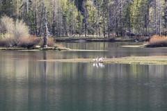 Cruising around near Oxbow Bend (shutter mania) Tags: river oxbowbend maytriprebel
