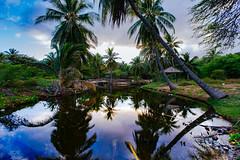 ES8A1488 (repponen) Tags: ocean trip beach garden island hawaii maui shipwreck gods lanai canon5dmarkiii
