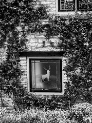 Barnsley Village (Simon Clare Photography) Tags: uk greatbritain england blackandwhite bw southwest english window monochrome architecture contrast digital mono vines nikon europe european village unitedkingdom britain eu monochromatic cotswolds shades deer explore gb british tones barnsley englishness simonclare d7200 simoncphotography sclarephoto