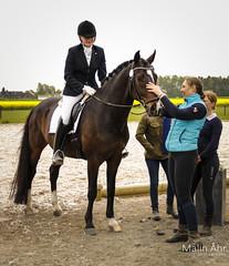 Nr. 44 (malinahr) Tags: horse color nature animal sport skne outdoor natur sterlen djur hst tvling skillinge
