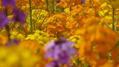 P1070727 (MartinMVZ) Tags: flower prague praha most hradany karlv