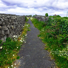 Pathway to Heaven - s (Briege Connolly) Tags: stonewalls wildatlanticway pathway wildflowers inismaan ireland