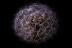 filigran (ddimblickwinkel) Tags: flower art nature nikon natur blume makro abstrakt d300 d300s
