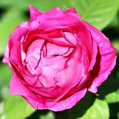 Maig_1035 (Joanbrebo) Tags: barcelona park flowers parque flores fleur blossom blumen fiori parc flors autofocus lunaphoto parccervantes efs18135mmf3556is canoneos70d