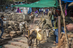 out the way (Tin-Tin Azure) Tags: world india heritage temple unesco archaeological mata gujarat pavagadh kalika champaner