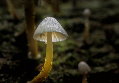 """Tropical Fungi • <a style=""""font-size:0.8em;"""" href=""""http://www.flickr.com/photos/7605906@N04/27219469880/"""" target=""""_blank"""">View on Flickr</a>"""