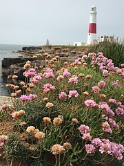 Portland Bill Lighthouse (simoncrowther1990) Tags: ocean camera uk flowers light sea england plants lighthouse holiday beach apple portland island coast cafe flickr unitedkingdom britain cliffs land isle hazard trinityhouse redandwhite iphone portlandbill visitorcentre 6s