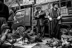 Chiken sellers (Saman A. Ali) Tags: street blackandwhite men monochrome shop blackwhite fuji market streetphotography photojournalism documentary social fujifilm chiken xt1 stphotografia fujifilmxt1