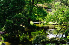 Japanese Tea Garden (dalecruse) Tags: sanfrancisco california green japan outdoors japanese japanesegarden tea outdoor japaneseteagarden teagarden lightroom japanesetea