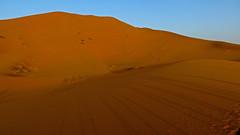 Sahara Morning Camels (macloo) Tags: travel camping sahara trek desert morocco camels