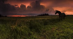 ORKAN (frantiekl) Tags: lighting summer sky horse storm nature field animals clouds landscape escape dynamic outdoor meadow dramatic tension bohemia a11 spirited