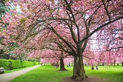 IMG_4594 (Irina Souiki) Tags: parcdesceaux france paris sceaux flowers nature parc park
