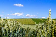 Weinviertel - Austria (gnter hemer) Tags: summer green clouds outdoor feld fields grn landschaft landsape