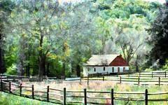 Summer Scene (Terry Pellmar) Tags: trees texture barn fence landscape legacy artdigital awardtree magicunicornverybest mygearandme