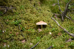 MH5_9210 (memories by Mark) Tags: mushroom rockies alberta banff rockymountains banffnationalpark johnstoncanyon