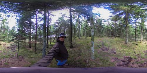 Skoven-4