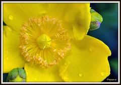 _JVA6907 (mrjean.eu) Tags: park pink flowers blue roses white france flower macro fleur rose yellow fleurs garden nikon jardin botanic lorraine botanique parc metz 105mmf28