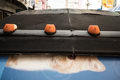 * (Sakulchai Sikitikul) Tags: street leica cat 35mm thailand sony streetphotography snap summicron songkhla hatyai a7s