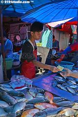 Fish Business (2121studio) Tags: thailand siam travelphotography amazingthailand  travelinthailand khlongtoeimarket  landoftiger landofwhiteelephant thaitourinformation wetmarketinbangkok