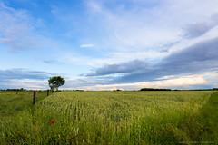 Evening in the countryside (Laurent Castiau) Tags: sky clouds canon landscape evening countryside horizon wideangle bluesky depthoffield ciel crop nuages paysage soir campagne bl cielbleu canoncamera canonlens grandangle profondeurdechamp
