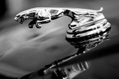 Jaguar (Traveller_40) Tags: bw blackwhite car giesing monochrome münchen pwm photowalk schwarzweis walkwithfriends carhood photowalkingmunich:event=79 refelction sliver jaguar noiretblanc