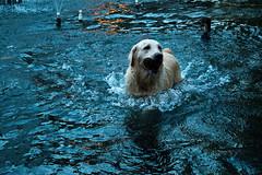 Que Frio (vanzan.pedro) Tags: cão lago agua chafariz cachorro animais nadando banho brincando molhado